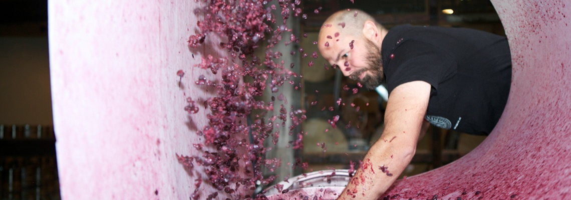 Winemaker Pressing Grapes