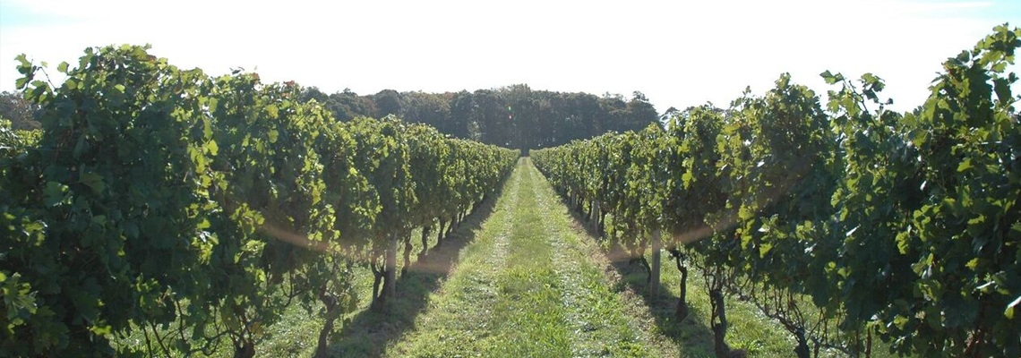 Winemaking-Section-Overview-01